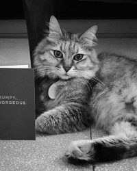 Black and white photo of a cat with a Lagom greetings card - Distributed by Steamship Trading Co. for greetings cards and home accessories distribution in Singapore and South East Asia.