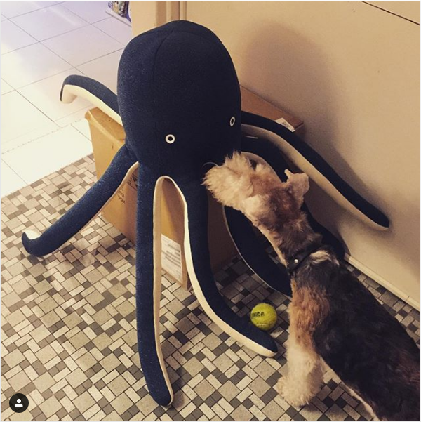 The unpacking continues and Wellie makes friends with Cosmo, the most MAGNIFICENT octopus I e'er did see! Everyone needs a Cosmo don't you think?#merimeri #dogsofinstagram #octopus #friends