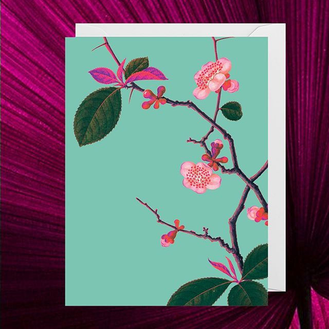 @lagomdesign has just released a stunning new range in collaboration with the Royal Botanical Gardens in Kew, London! Each is a twist on a work from their archives, this one being inspired by a watercolour by an unknown Chinese artist #lagom #botanicalgardens #singaporeshopping #stationery #greetingcards #floral #pastel #watercolour