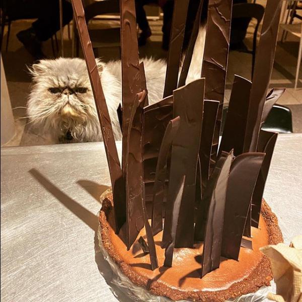 chocolate on cake